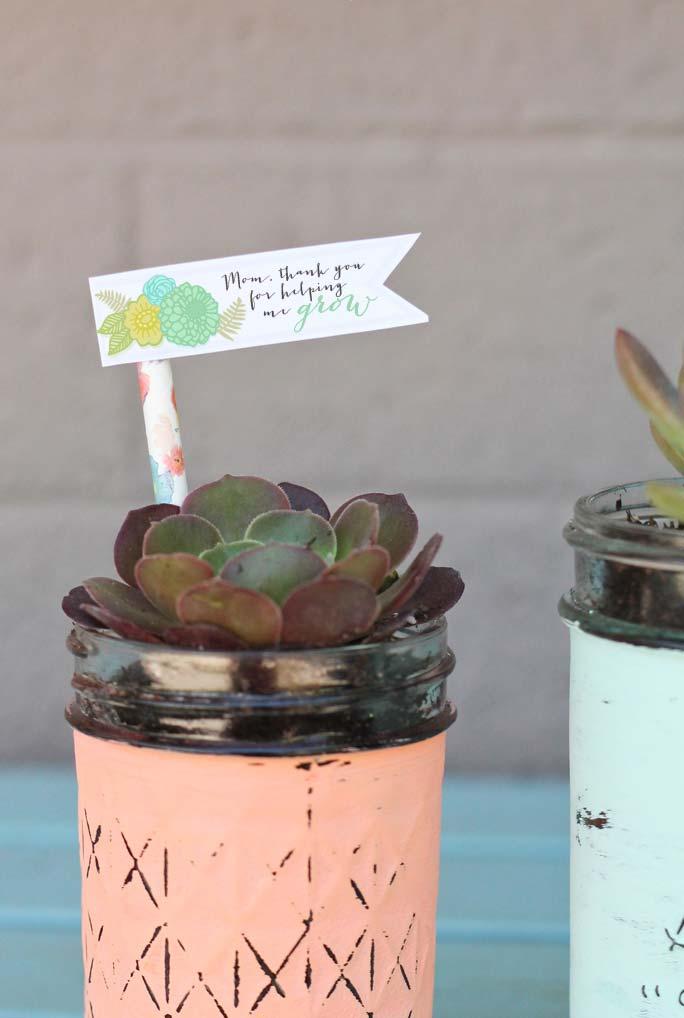Suculentas e plantinhas para as mães
